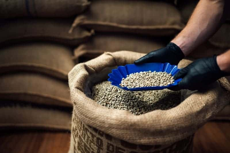 dry coffee bean exporting