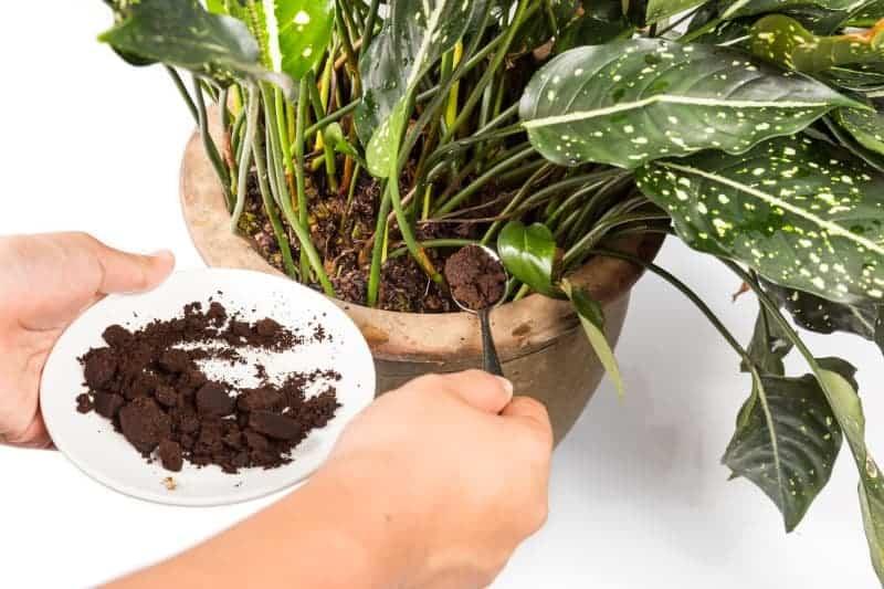 using coffee grounds