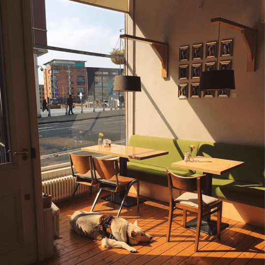mccune smith cafe
