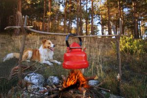 dog near campfire with boiled tea in autumn forest